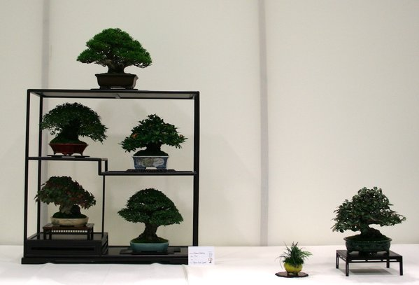 Gewinner: Best in Show, Best Shohin Display und Best Shohin