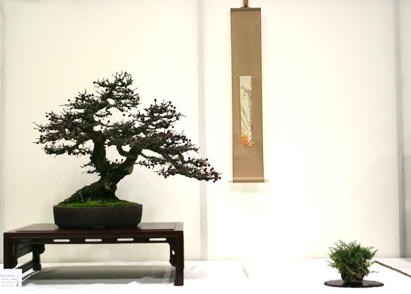 Gewinner: Best European Native Bonsai