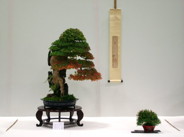 Gewinner: Best Deciduous Bonsai