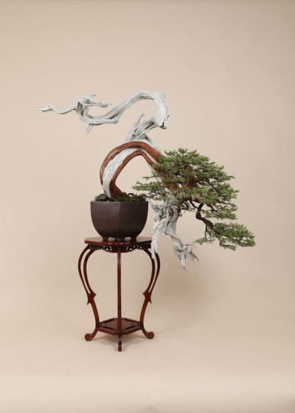 Foto . Bonsai Art (Tom Hayken)