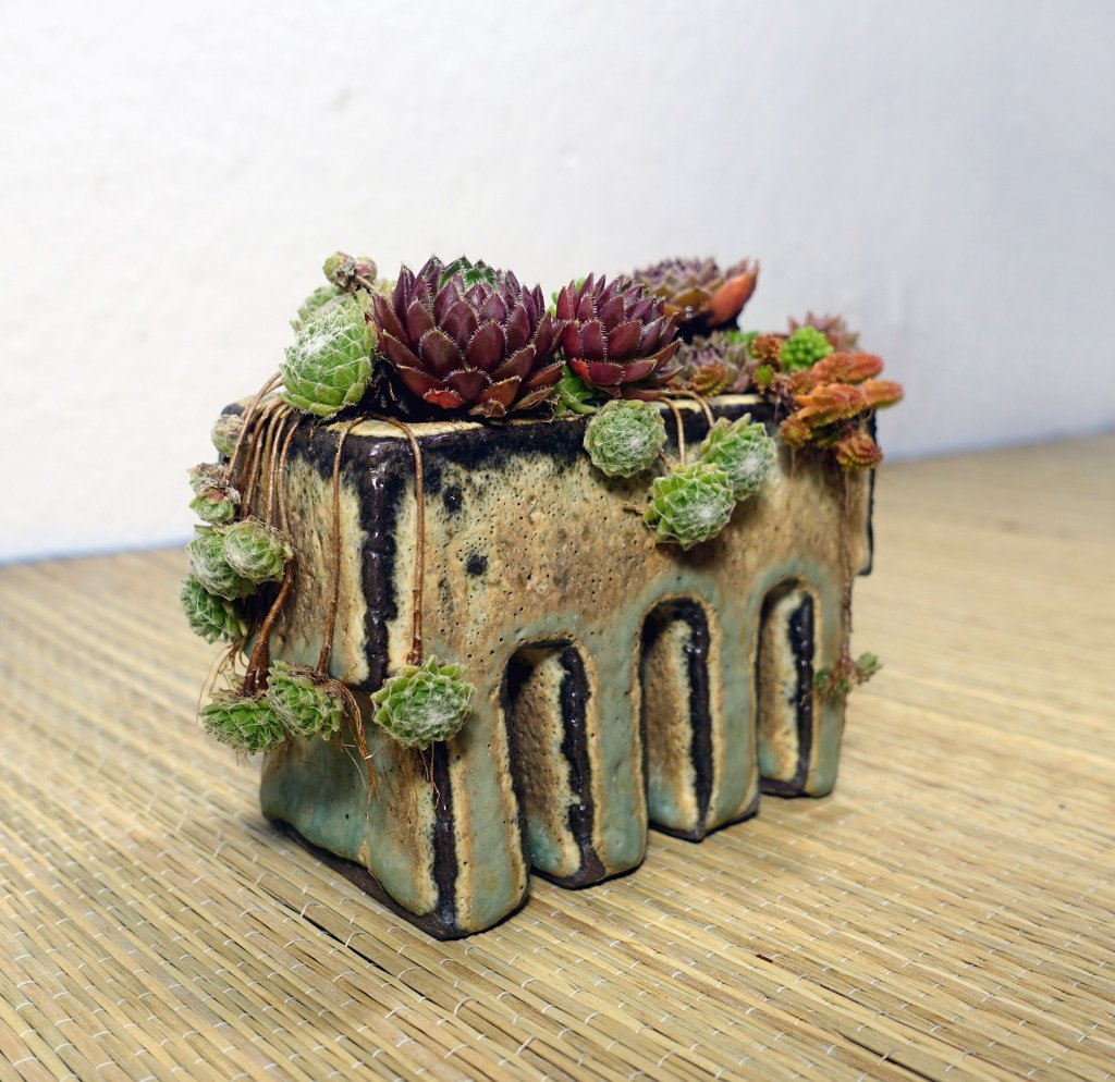 Sempervivum05_2019-02e.JPG